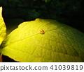 蟲子 漏洞 昆蟲 41039819