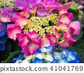 พืชไม้ดอกขนาดใหญ่ 41041769
