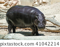 young hippopotamus with a shallow depth of field 41042214