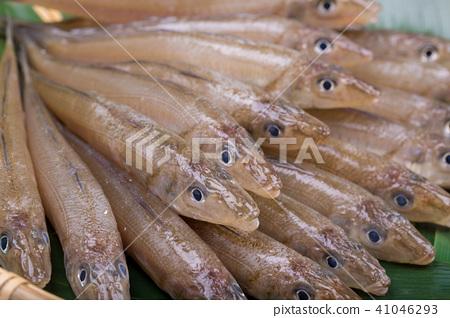 키스 생선 재료 41046293