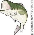 ปลา,ปลากะพงปากกว้าง,รถบัส 41049984