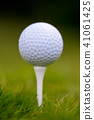 golf ball grass 41061425