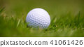 golf ball grass 41061426