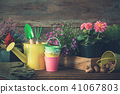 Seedlings of garden plants in flowerpots.  41067803