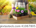 Woman gardener with wooden box of flower pots. 41067805