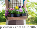 Woman gardener holds a wooden tray with flowerpots 41067807