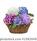 hydrangea flowers in a basket 41082648