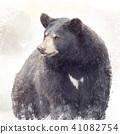 Black Bear watercolor 41082754