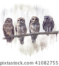 Barred Owls watercolor 41082755