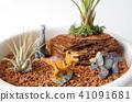 Dinosaur's diorama 41091681