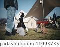 dog, dogs, camp 41093735