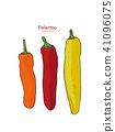 Three Palermo sweet peppers vector. 41096075