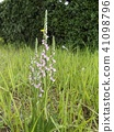 ดอกไม้,ฤดูร้อน,หน้าร้อน 41098796