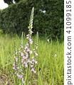 ดอกไม้,ฤดูร้อน,หน้าร้อน 41099185