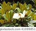 ดอกไม้,ฤดูร้อน,หน้าร้อน 41099851