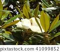 ดอกไม้,ฤดูร้อน,หน้าร้อน 41099852
