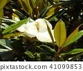 ดอกไม้,ฤดูร้อน,หน้าร้อน 41099853