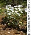 ดอกไม้,ฤดูร้อน,หน้าร้อน 41099854