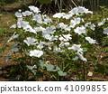 ดอกไม้,ฤดูร้อน,หน้าร้อน 41099855