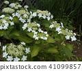 ดอกไม้,ฤดูร้อน,หน้าร้อน 41099857