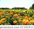 ดอกไม้,แปลงดอกไม้ 41102411