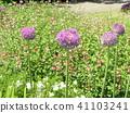 ดอกไม้,แปลงดอกไม้ 41103241