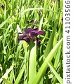 ดอกไม้,แปลงดอกไม้,ผักใบ 41103566