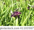 ดอกไม้,แปลงดอกไม้,ผักใบ 41103567