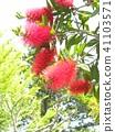 ดอกไม้,ฤดูร้อน,หน้าร้อน 41103571