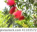 ดอกไม้,ฤดูร้อน,หน้าร้อน 41103572