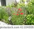 ดอกไม้ 41104006