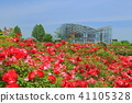 장미, 장미꽃, 로즈 41105328