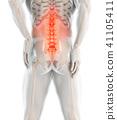 3D Illustration of sacral spine painful. 41105411