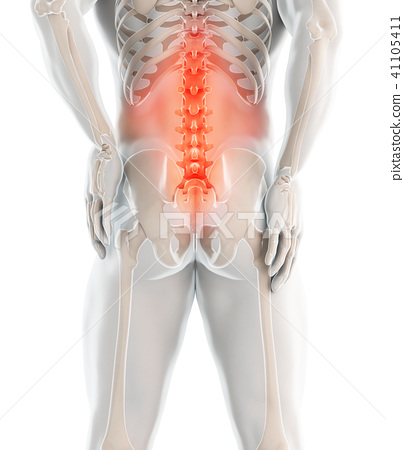 3D Illustration of sacral spine painful. 41105411