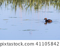Slavonian Grebe with a just caught small fish 41105842