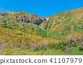 Maple leaves image 41107979