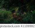 초여름의 반딧불 스즈카 반딧불 마을 겐지 보탈 41109982