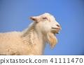動物 藍天 動物園 41111470