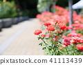 꽃, 플라워, 장미 41113439