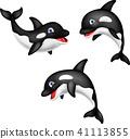 Cartoon orca collection set 41113855