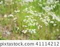 식물, 꽃, 플라워 41114212