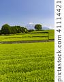 Tea fields and Mt. Fuji 41114421