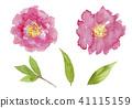 中國牡丹 花朵 花 41115159