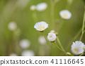 꽃, 플라워, 잡초 41116645