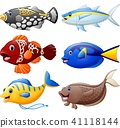 Fish cartoon set  41118144