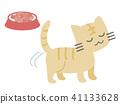 แมว,อาหาร,สัตว์ 41133628