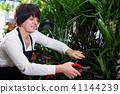 Seller tending yucca 41144239