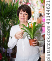 Customer choosing bromelia 41144621