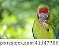 金剛鸚鵡 41147700