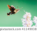 花朵 花卉 花 41149038